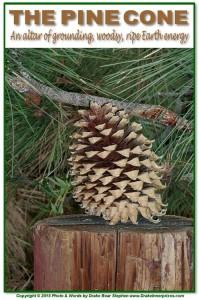 Pine Cone s1