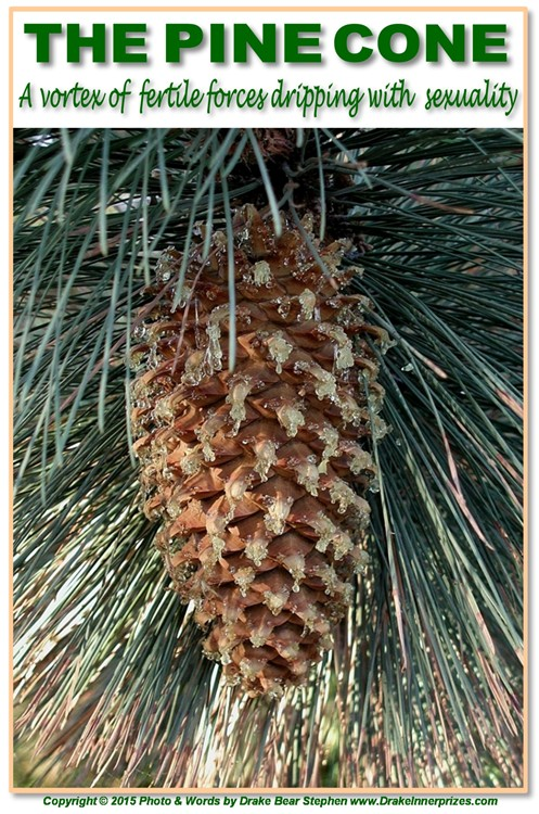 The Beauty And Symbolism Of Pine Cones Bear With Me