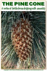 Pine Cone s3