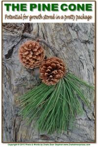 Pine Cone s4