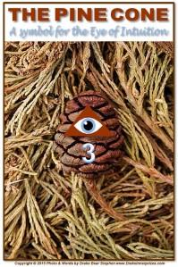 Pine Cone s6