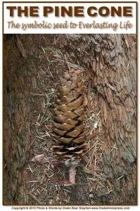 Pine Cone s8