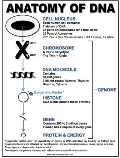 DNA sml